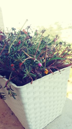 Autumn Time 😃😄 First Eyeem Photo
