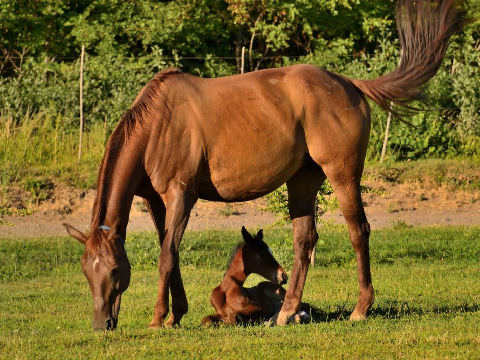 Animal Photography Domestic Animals Horses Mammal Togetherness Female Animal Animal Family Young Animal Baby Horse