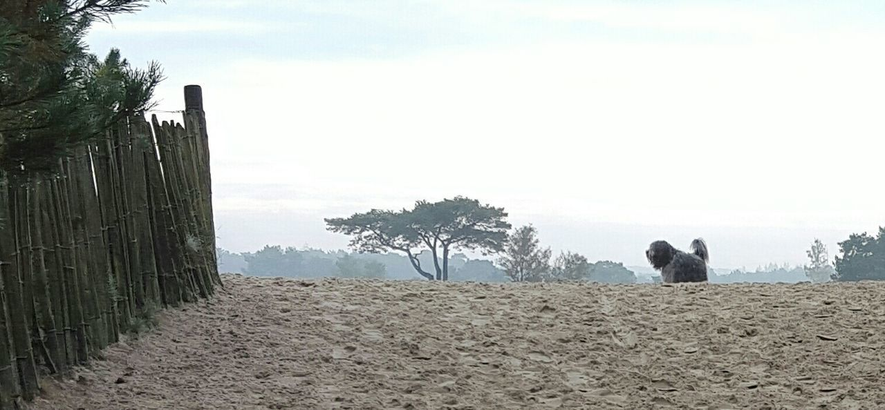 tree, animal themes, one animal, mammal, domestic animals, nature, day, sky, field, outdoors, no people, landscape, pets, beauty in nature