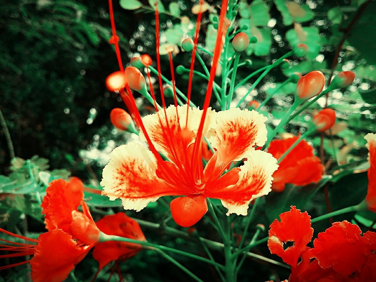 flower, growth, plant, petal, beauty in nature, nature, flower head, freshness, fragility, no people, blooming, outdoors, day, close-up, red, leaf