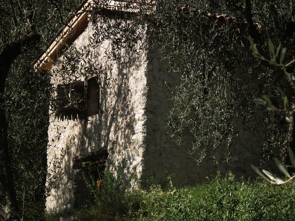 Abandoned Architecture Beauty In Nature Built Structure Capanna Day Grass House Hütte Italia Italie Italy Italy❤️ Italy🇮🇹 Landscape Nature No People Oil Trees Olivenbäume Olivenhain Outdoors Sunlight Tree Uliveto Ulivi