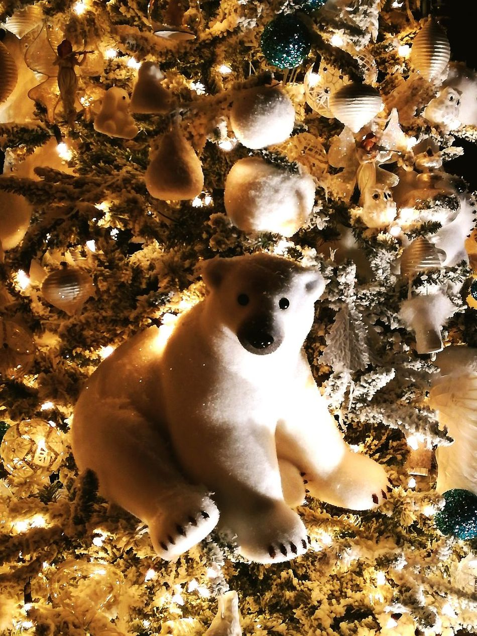 Christmas No People Christmas Decoration Winter Ours Blanc Ours Polaire Ours Noel2016 Illuminated Arbre De Noël Chrismas Tree