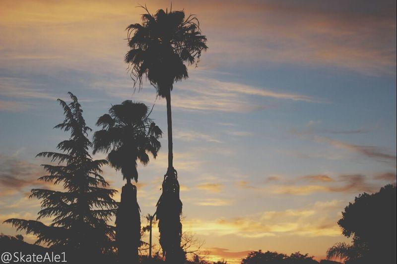 Sunset Beautiful Trees
