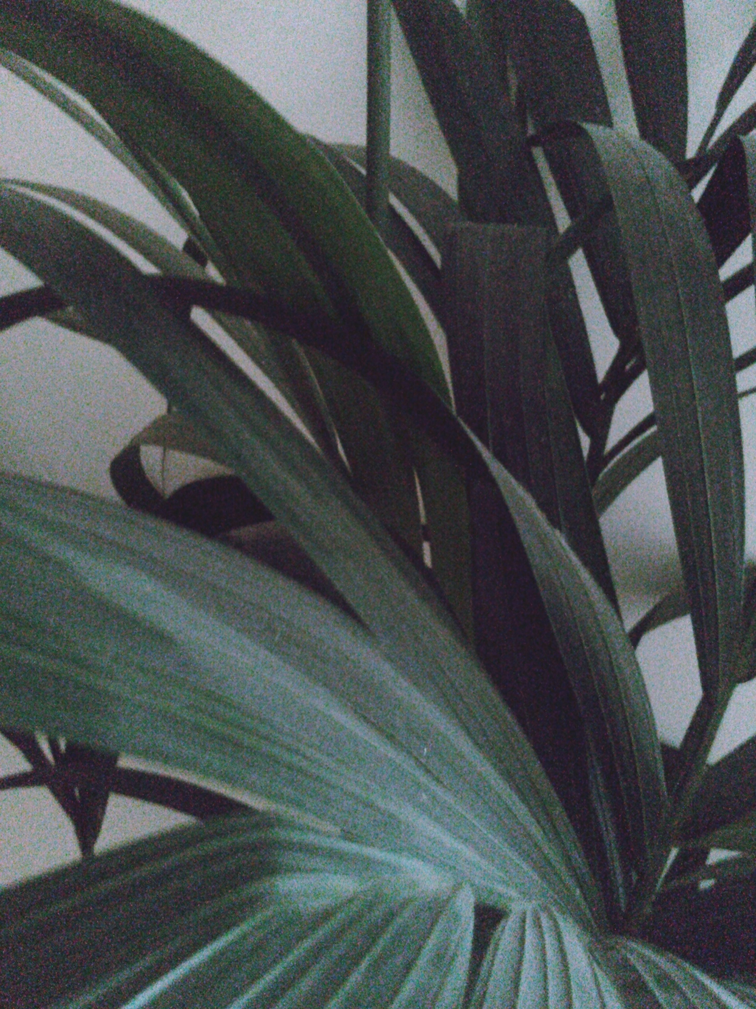leaf, growth, plant, close-up, green color, indoors, nature, sunlight, potted plant, high angle view, no people, day, focus on foreground, leaf vein, growing, freshness, beauty in nature, pattern, green