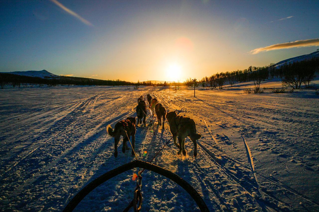Dog Wintertime Winter Wonderland Winter Sweden Sport Snow Q Quadruped Quick The Great Outdoors - 2016 EyeEm Awards 43 Golden Moments