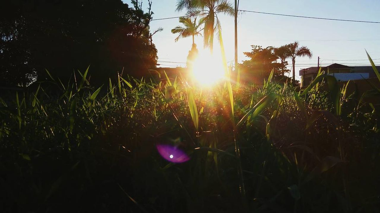 lens flare, growth, sun, sunbeam, sunlight, nature, plant, sunset, field, bright, grass, no people, outdoors, beauty in nature, tranquility, sky, tree, scenics, day
