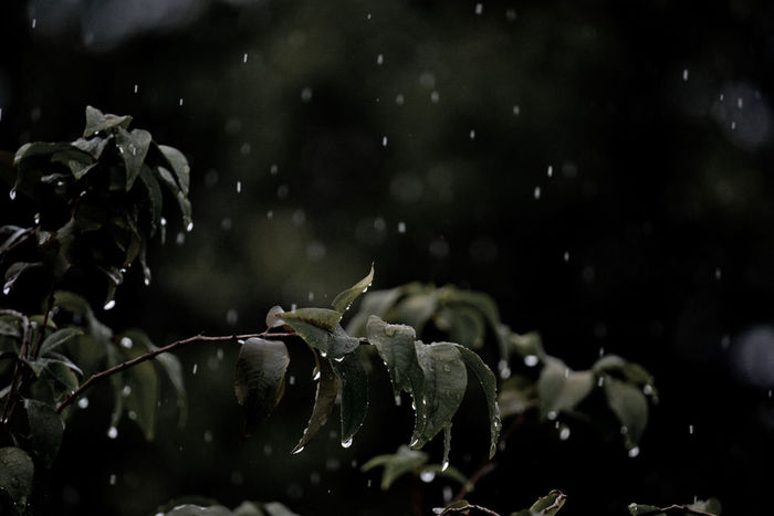 Raindops keep falling..... Raindrops IslamabadTheBeautiful Pakistan