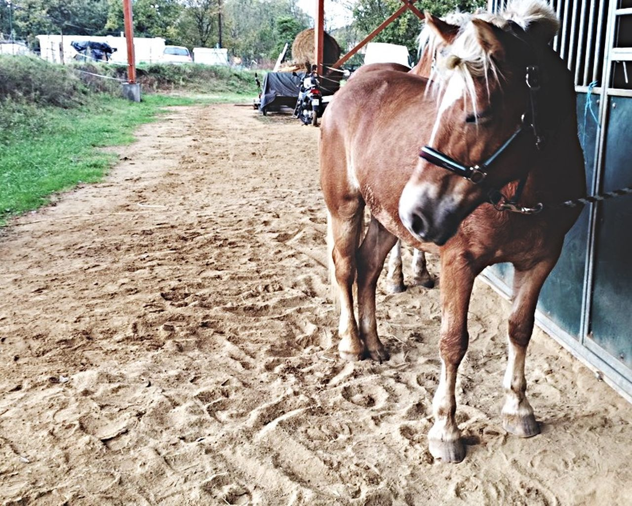horse, domestic animals, animal themes, mammal, working animal, livestock, day, one animal, outdoors, horse cart, no people