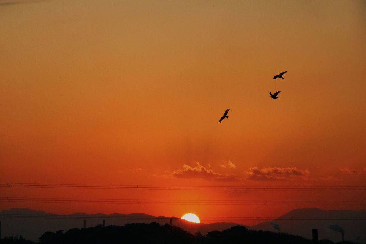 Sunset Bird Orange Color No People Sky Day Aichi Japan Sunsets Sunset_collection 夕陽 ゆうひ Sunset Silhouettes