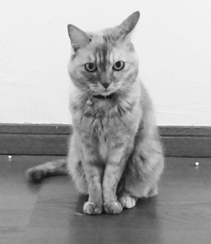 Love Okayama Kurashiki Japan Cute Cat Lovers Cat Watching Cat♡ Cats Cat Monochrome