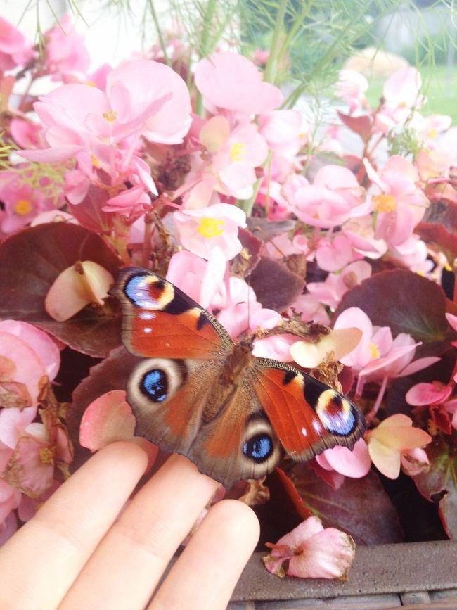 Butterfly Butterflyporn Flowers Macro Beauty Nature Hand Butterfly ❤