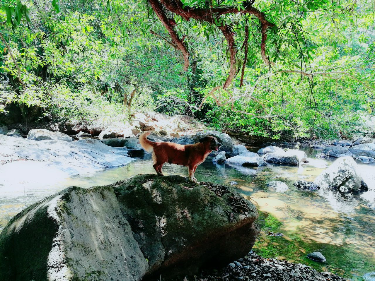 animal themes, one animal, rock - object, mammal, nature, standing, tree, domestic animals, water, day, outdoors, no people, green color, full length, animals in the wild, beauty in nature, waterfall