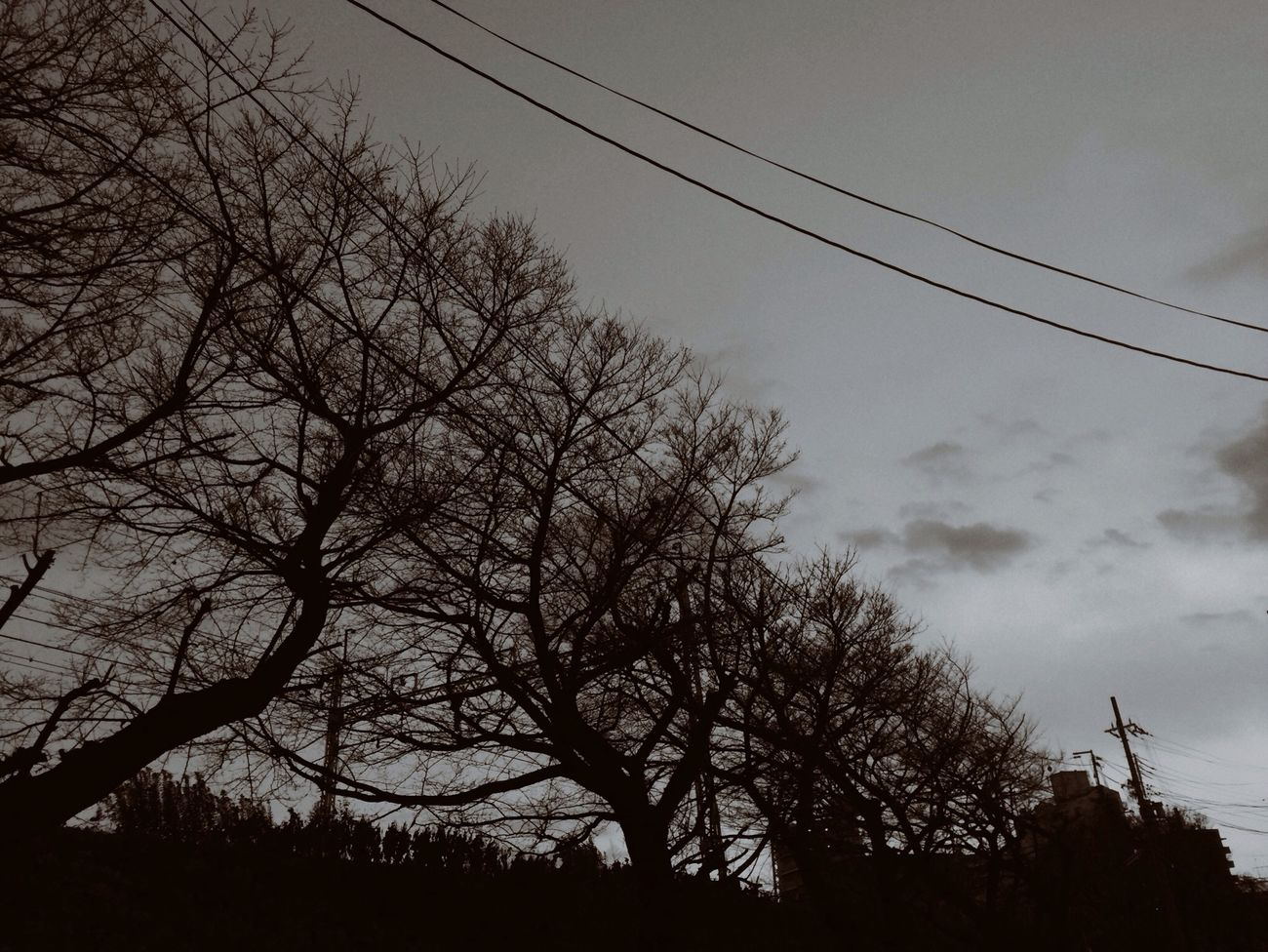 Monochrome 夕暮れどき