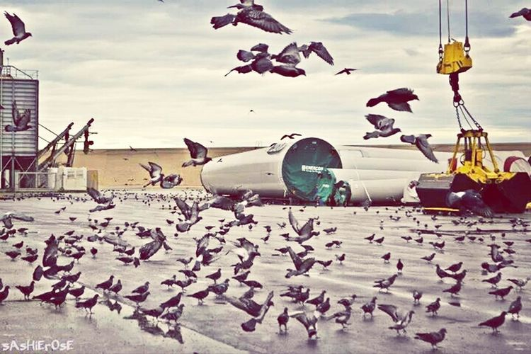 A hundreds of doves searching for food at Port Of Bari Doves Fly Bird Fly EyeEm Nature Lover