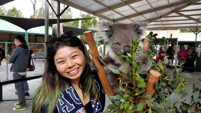Koala!! Smiling Portrait Lifestyles Happiness Koala Bear Koala 🐨 Koala In Tree Animal Wildlife & Nature Beauty In Nature Animal Wildlife Caversham Wildlife Park Perth Australia Perth