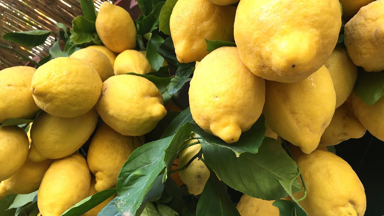 Lemon Lemons Lemontree Lemon Trees Lemon Decoration Italy Amalfi Coast Fruits Harvest Summer Summertime Fruity