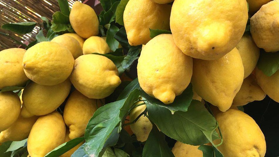 Lemon Lemons Lemontree Lemon Trees Lemon Decoration Italy Amalfi Coast Fruits Harvest Summer Summertime Fruity