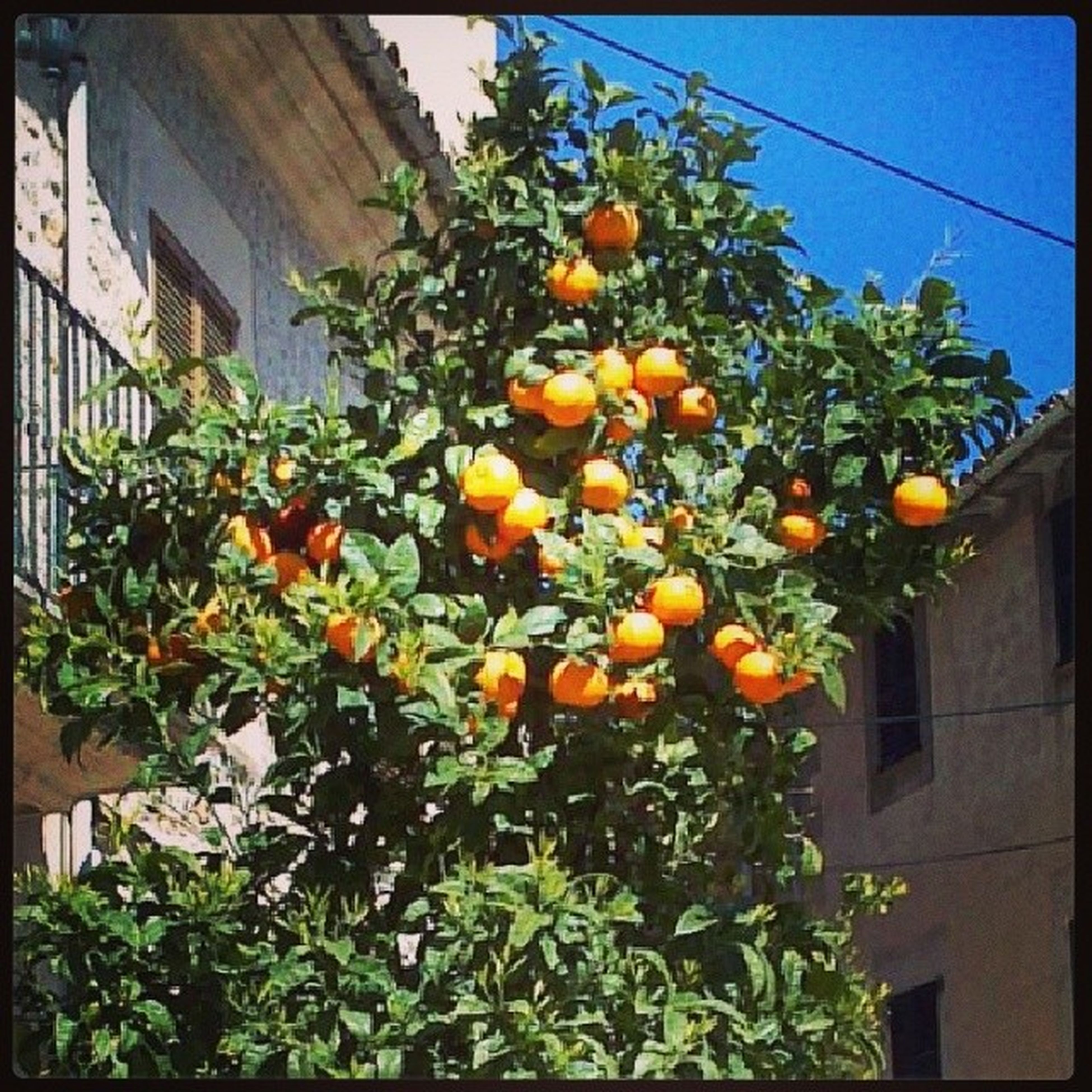 Апельсинки на Улицах Испании )))