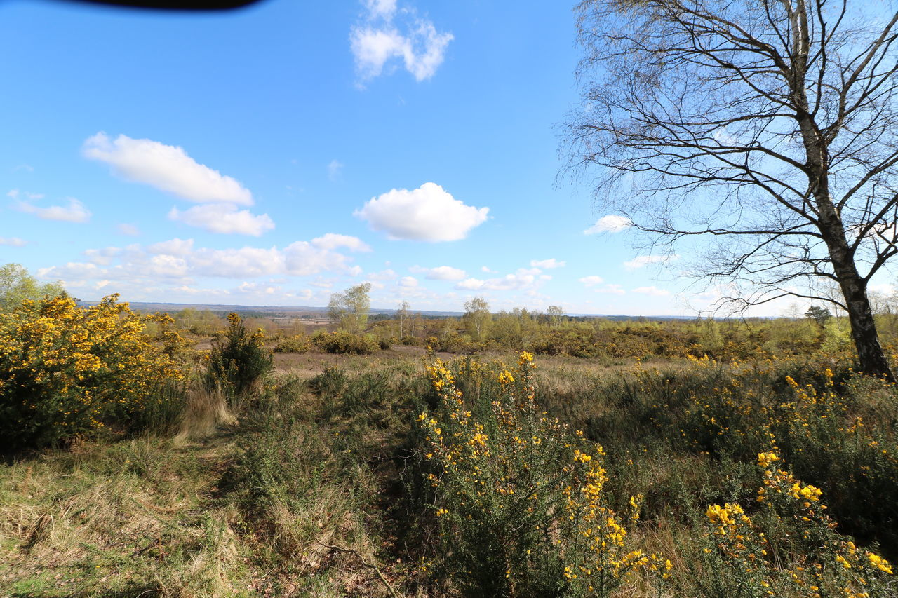 Beauty In Nature Cloud - Sky Common Country Walking Day Gorse Growth Heathland  Landscape Nature No People Outdoors Plant Scenics Sky Tree