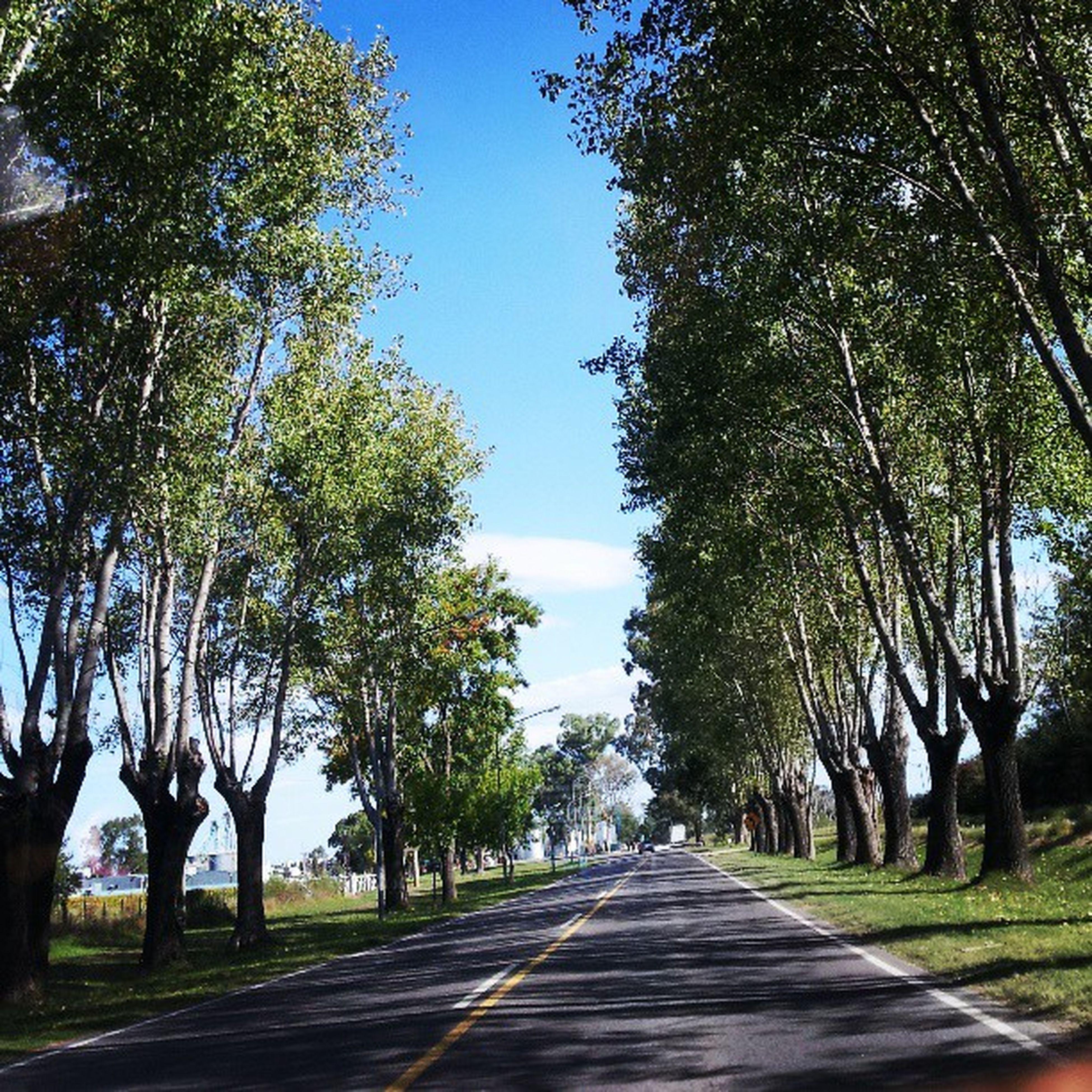 the way forward, tree, diminishing perspective, vanishing point, road, treelined, empty road, transportation, tranquility, long, empty, clear sky, tranquil scene, nature, footpath, growth, sunlight, sky, street, tree trunk