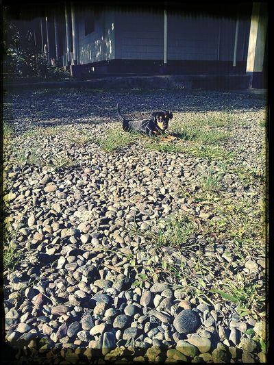 Dogoftheday Dog Dogsitting DogLove