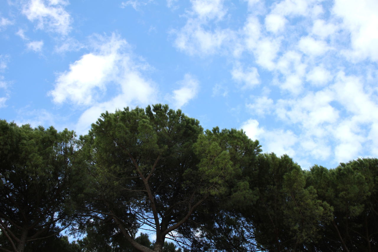 Blue Cloud - Sky Day Green Green Color Italy Low Angle View Lugnano In Teverina No People Outdoors Trees And Sky Umbria
