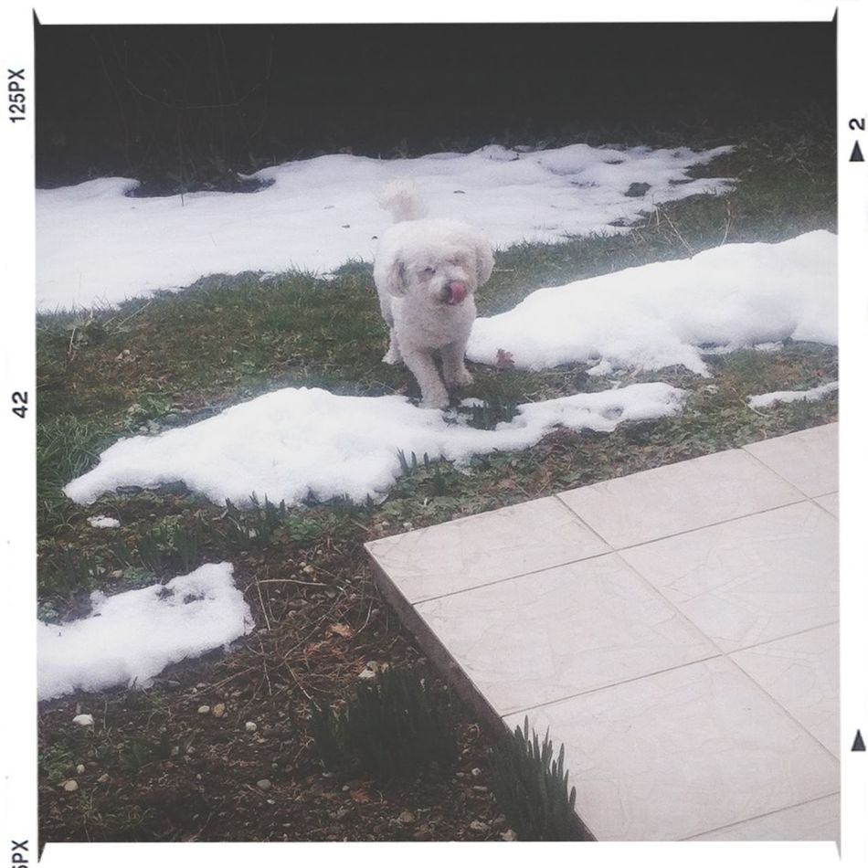 Snow My Dog Playing In The Snow So Cute ???