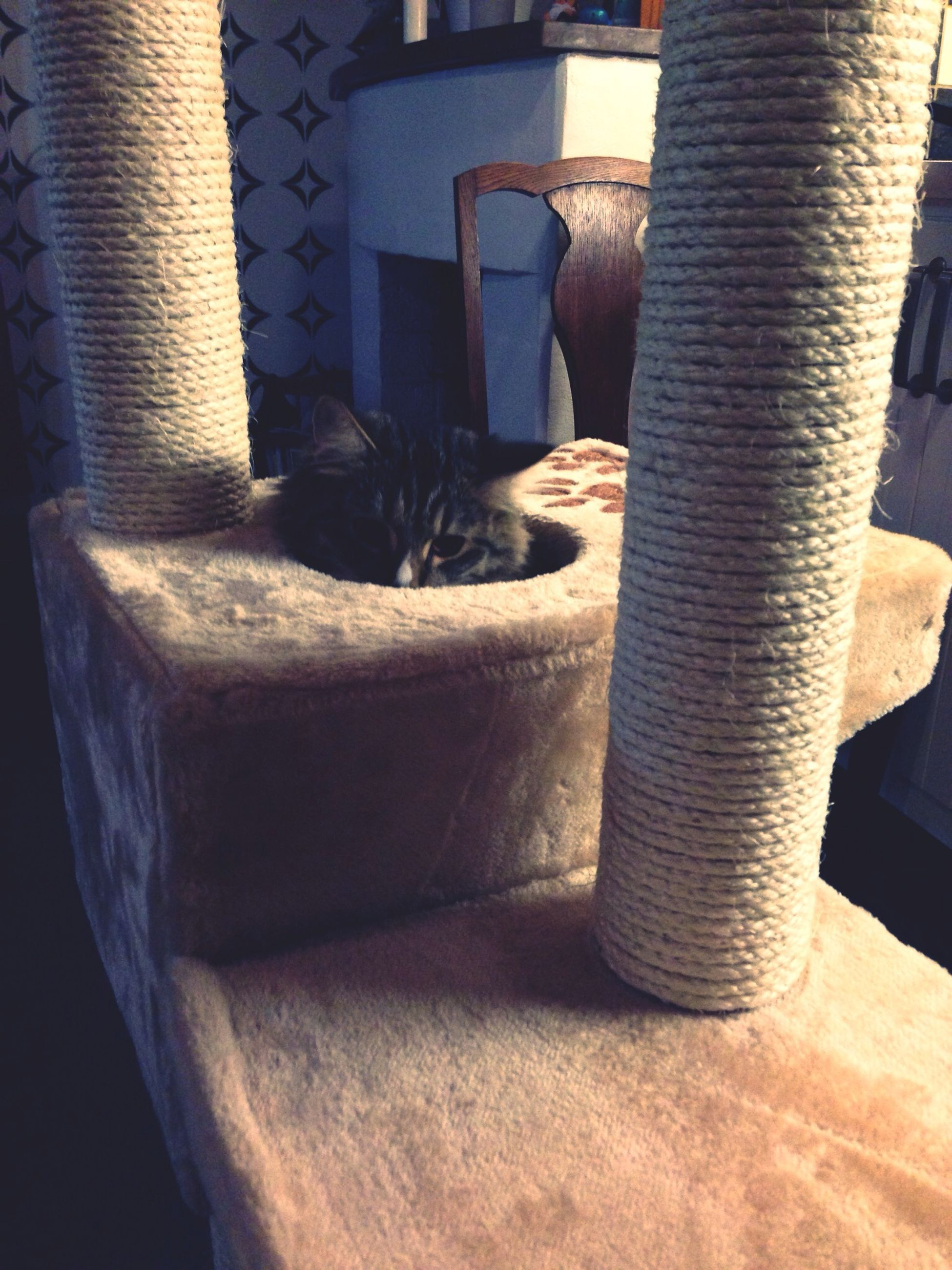 one animal, animal themes, domestic animals, mammal, pets, indoors, domestic cat, cat, no people, relaxation, built structure, feline, wall - building feature, sunlight, high angle view, wood - material, close-up, architecture, day, resting