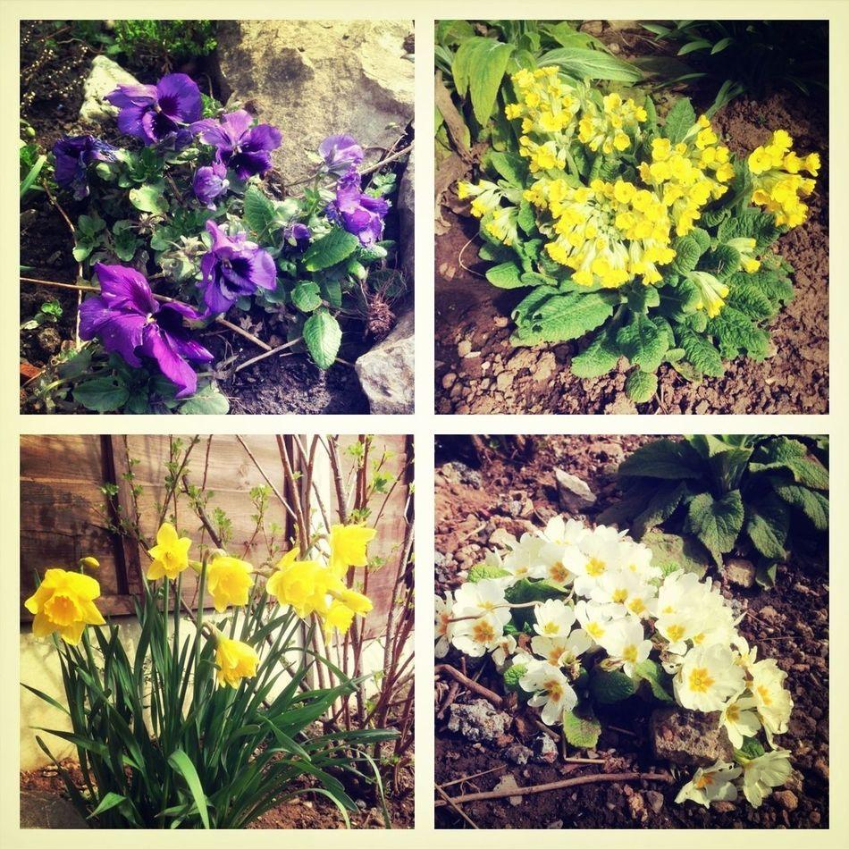 Flowers Garden Flower Gardening