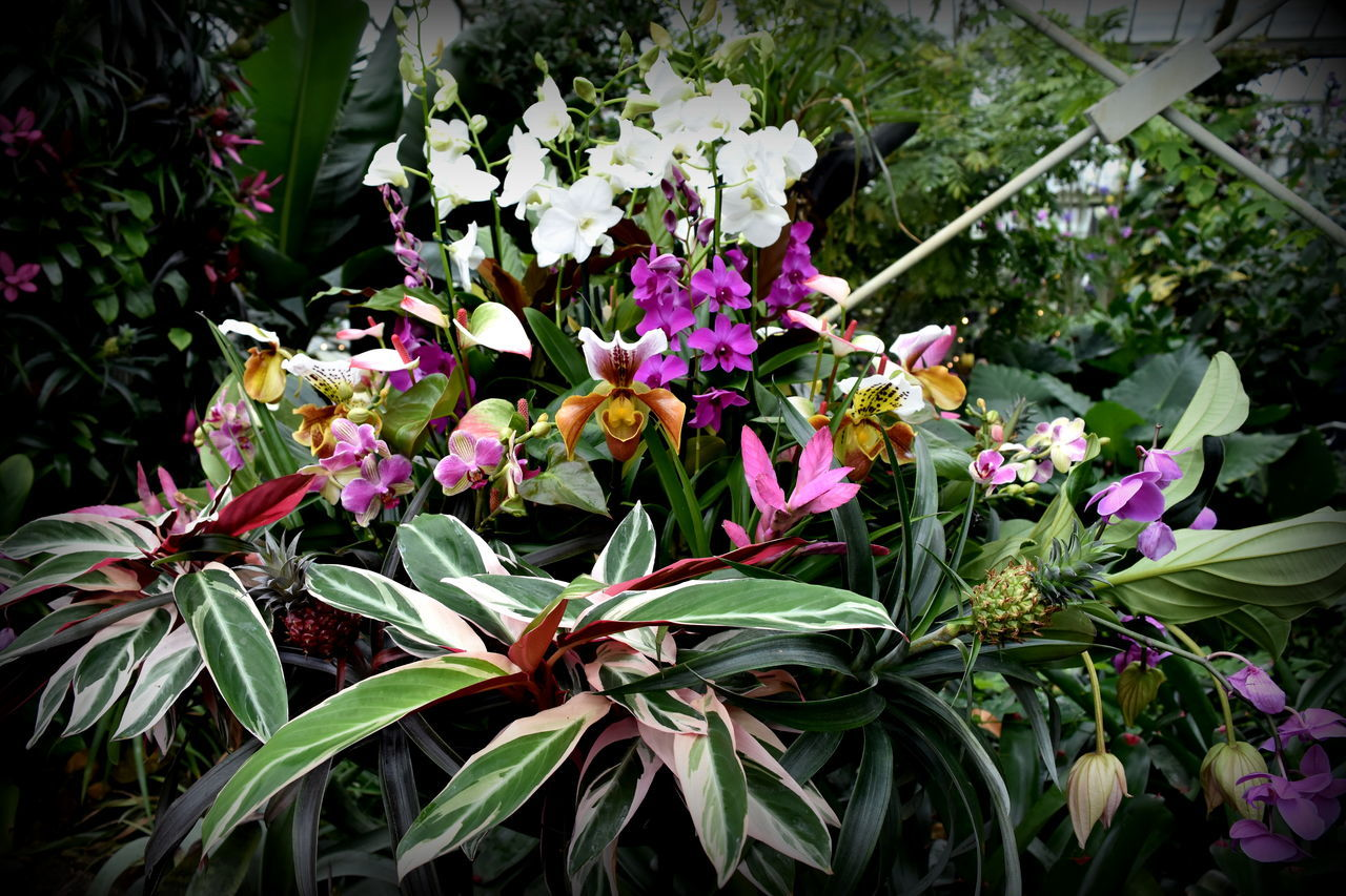 Beauty In Nature Close-up Flower Flower Head Fragility Freshness Growth Nature No People Orange Color Orchid Orchid Blossoms Orchid Flower Orchids Plant