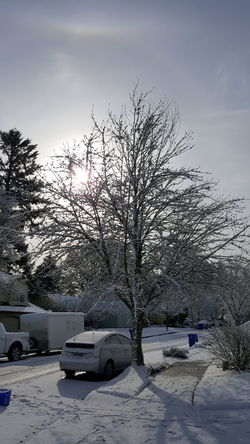 Snowday Sunrise No People Winter Snow Outdoors Sky Cold Temperature Day Nature