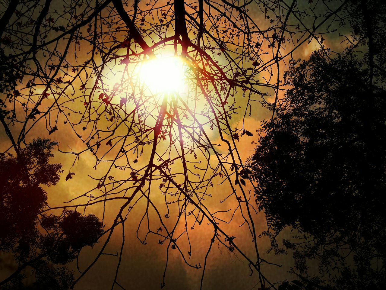 Sunset #sun #clouds #skylovers #sky #nature Beautifulinnature Naturalbeauty Photography Landscape [a: Sun Branches And Sky Branches ❤ Branches And Flower Branches Like Veins Sky And Clouds Orange Sky Sun ☀ Sun_collection, Sky_collection, Cloudporn, Skyporn Sunshine💛 Sunshine Through The Trees Branches Pattern Branches And Leaves Sunrise_sunsets_aroundworld Nature_collection