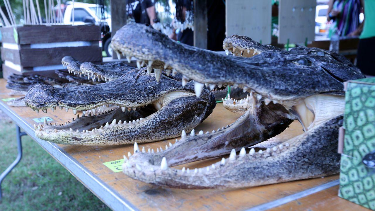 Texasgatorfest Gators Gator Gatorfest Alligator