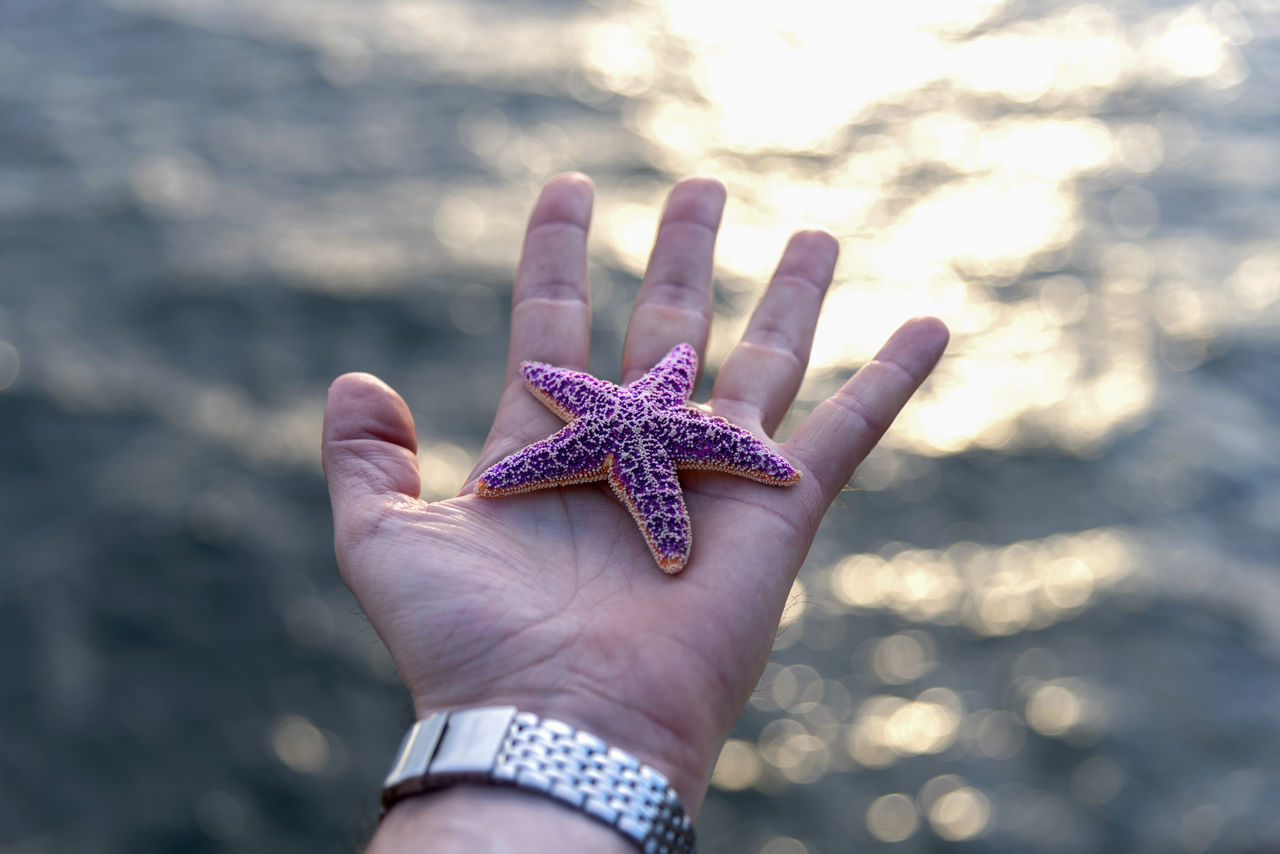Close-Up Of Hand Holding Starfish