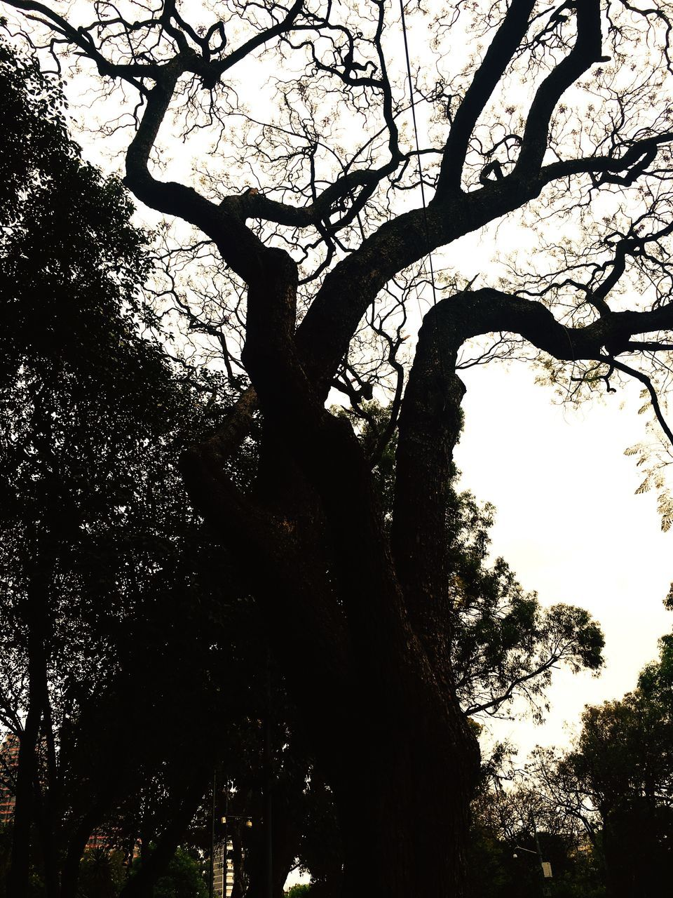 tree, branch, low angle view, tree trunk, nature, outdoors, silhouette, day, growth, no people, sky, beauty in nature