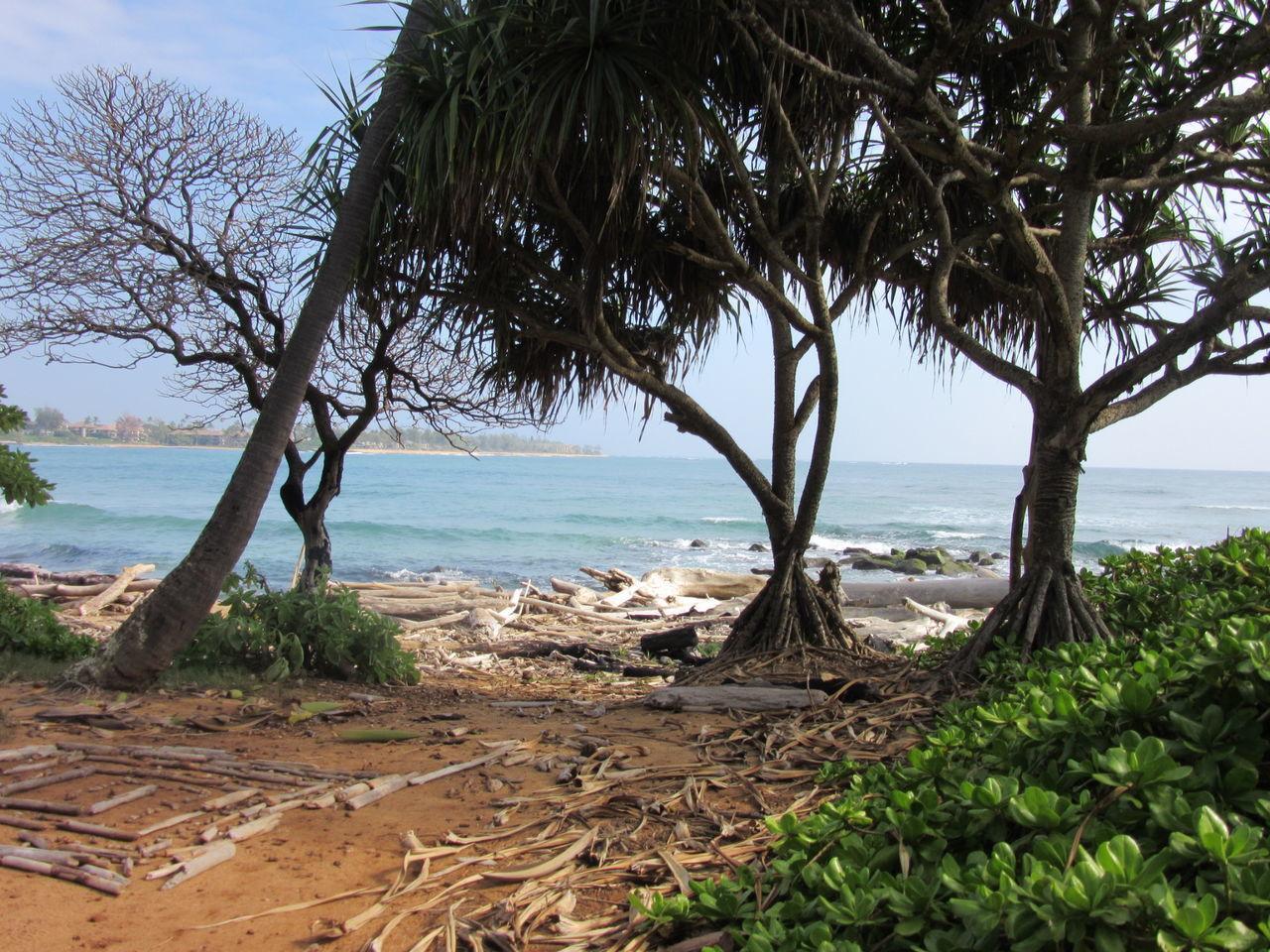 Sea Beach Tree Nature Water Horizon Over Water Outdoors Travel Destinations Scenics No People Beauty In Nature Branch Tree Driftwood Kauai Hawaii