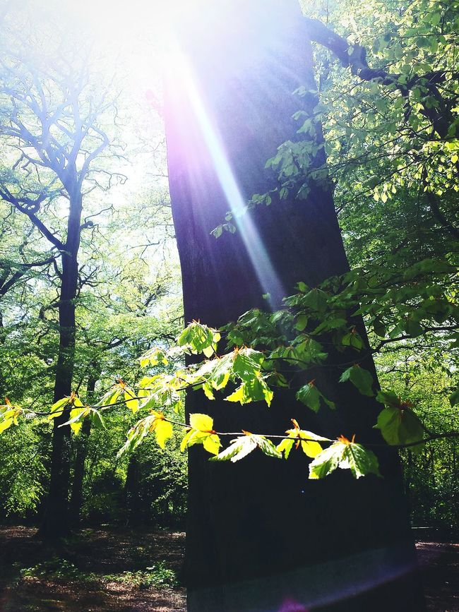 Magical Trees Magical Places Alderley Edge Light Glare Book Cover