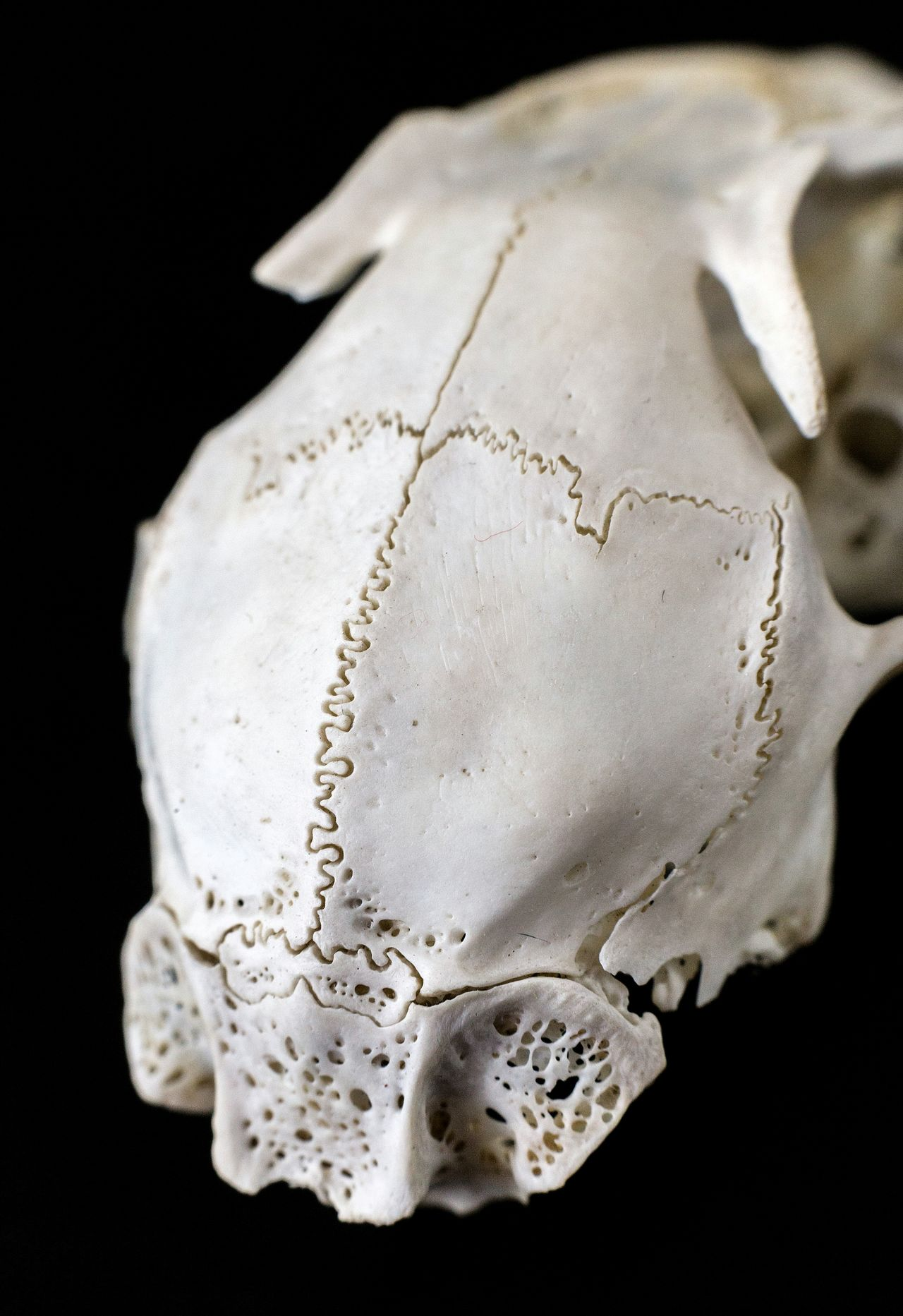 Fusion. Bones Skull Macro Macro_collection