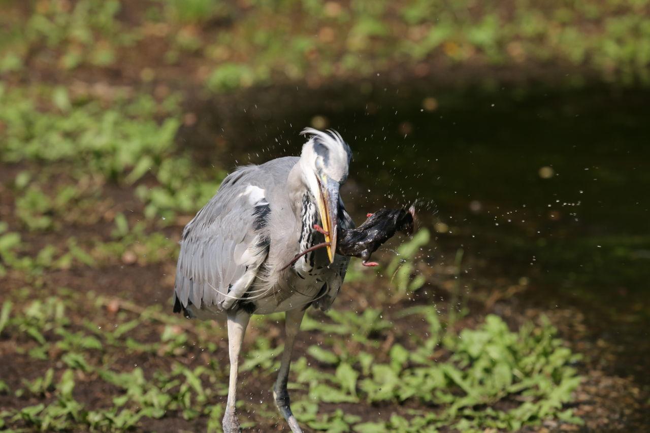 Bird Bird Eating