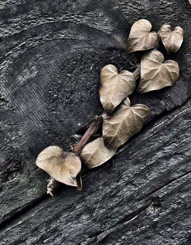 Check This Out Leaves Taking Photos Detail Abstract Dead Nature IPhoneography Iphoneonly Iphone6plus Contrast