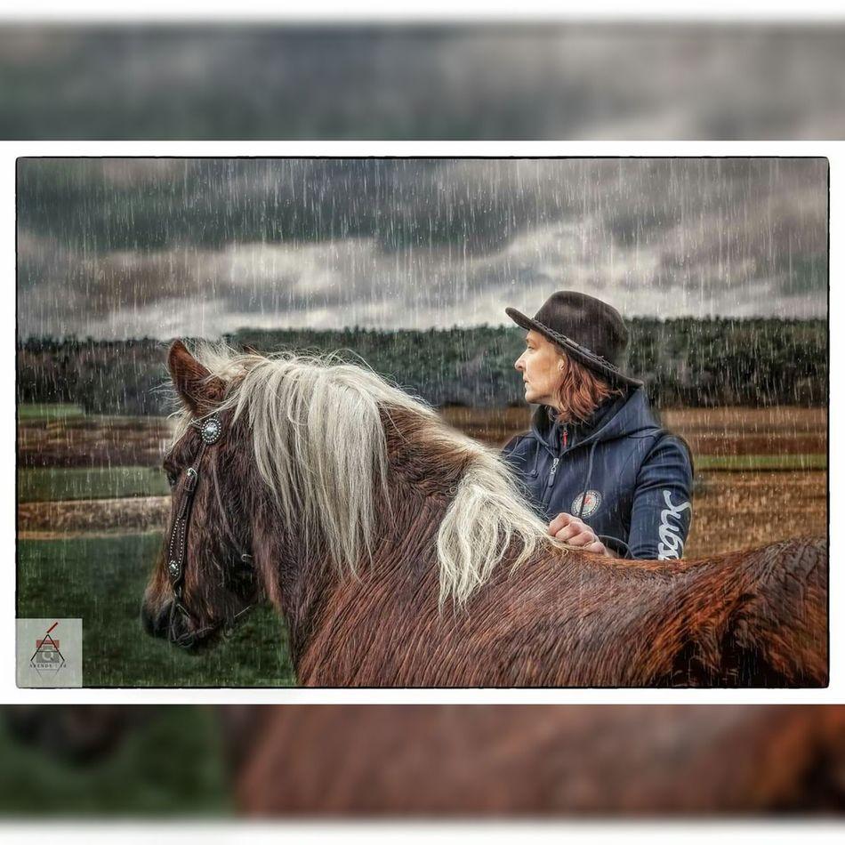 Outdoors Cowboy Hat Horse Photography  Horsepassion Schwarzwalders SchwarzwalderFuchs Blackforest Chestnut Kaltblut Beauty In Nature Horse Photography  Horse Portrait Horselove Rainy Weather Equine