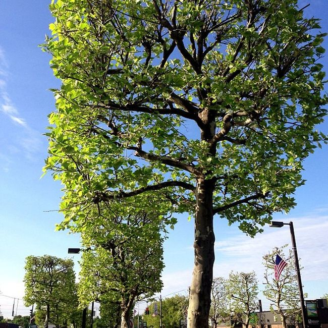 Square Trees!!