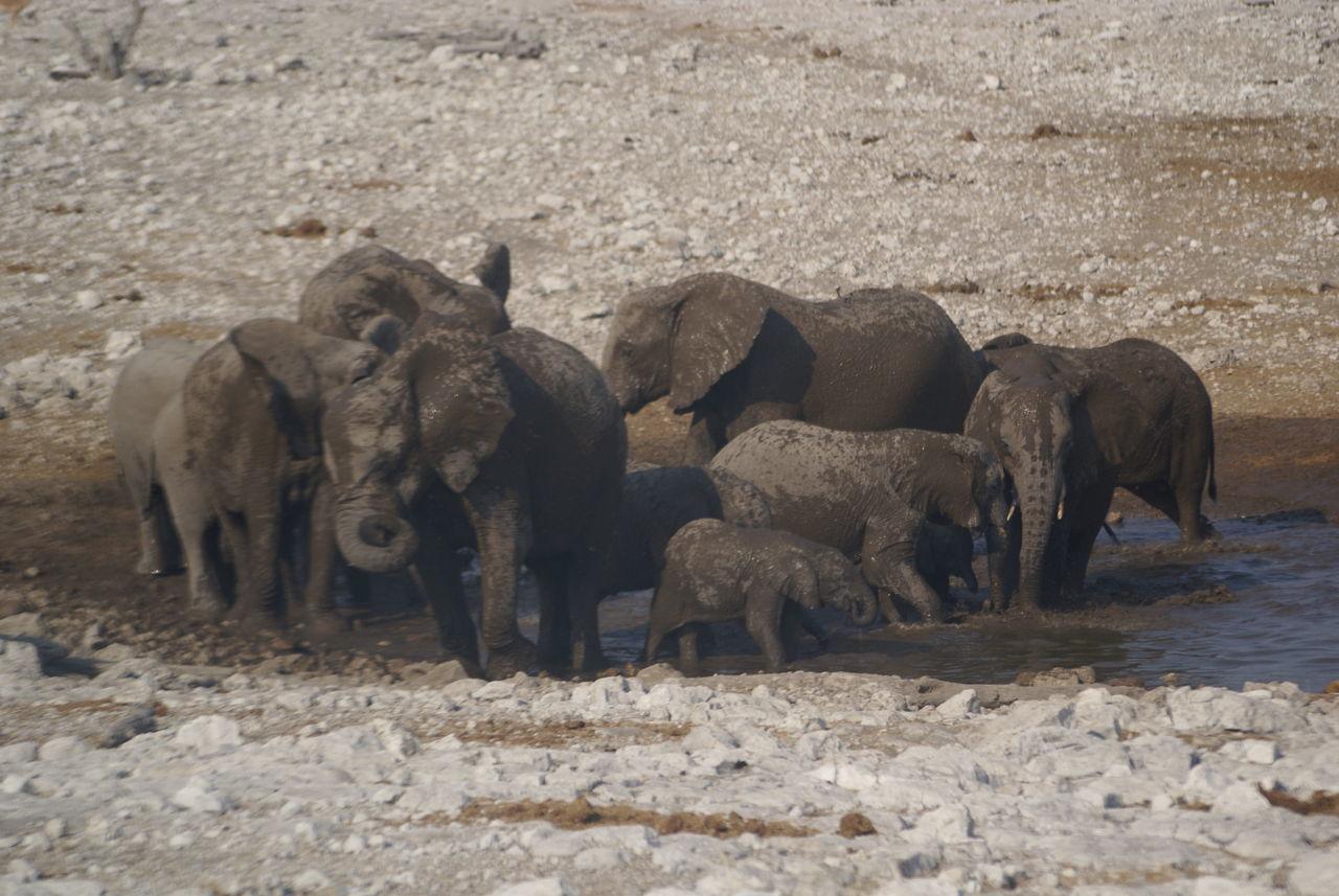 animal themes, animals in the wild, mammal, no people, day, animal wildlife, outdoors, nature, safari animals