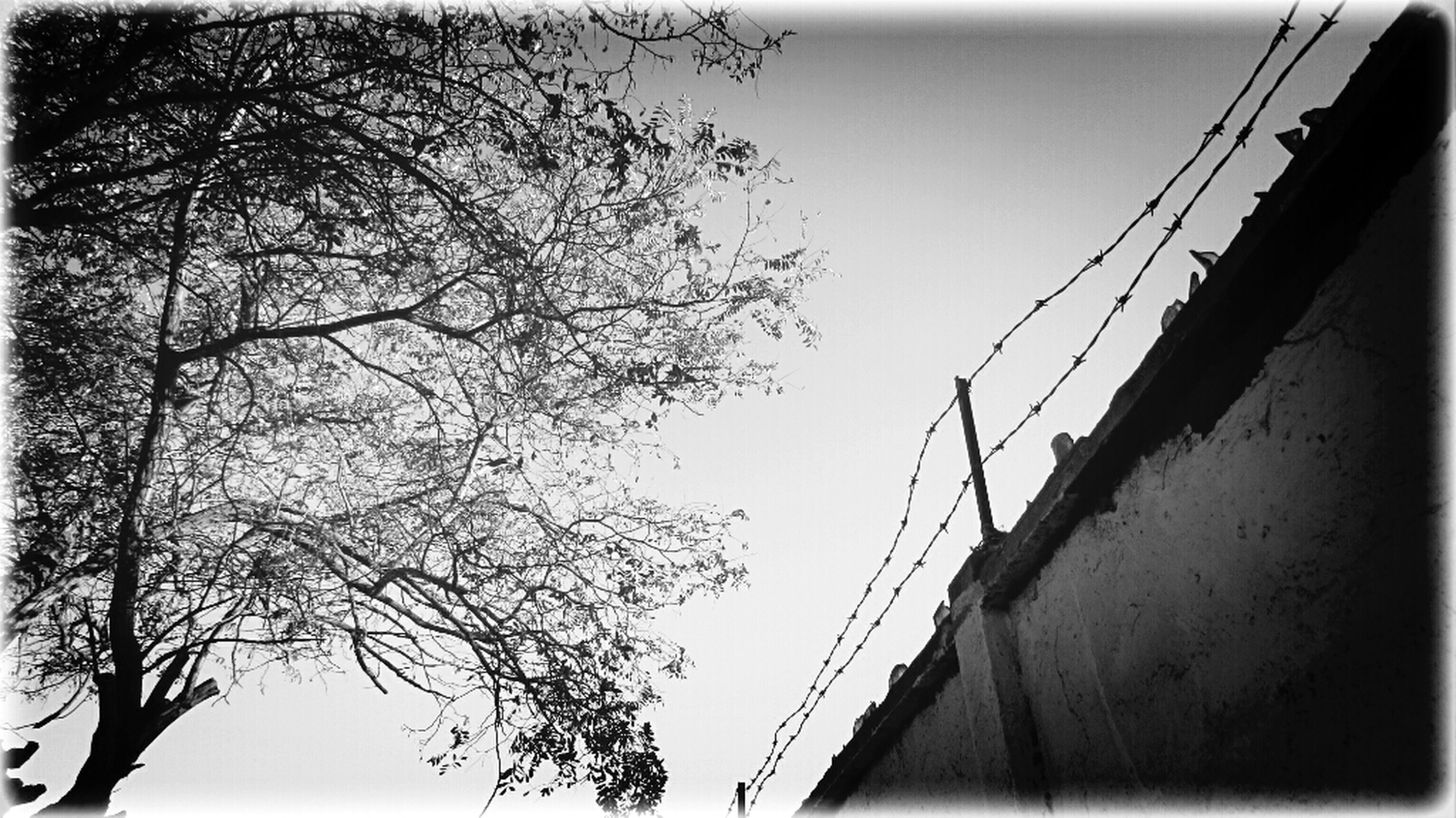 low angle view, tree, transfer print, built structure, connection, architecture, auto post production filter, sky, bare tree, branch, clear sky, railing, outdoors, day, no people, building exterior, bridge - man made structure, power line, nature, silhouette