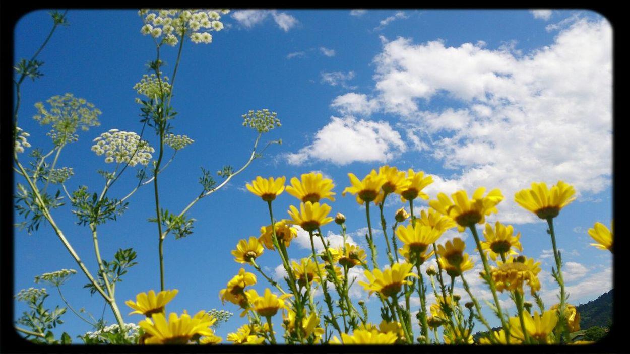 Relaxing Yellow Sky