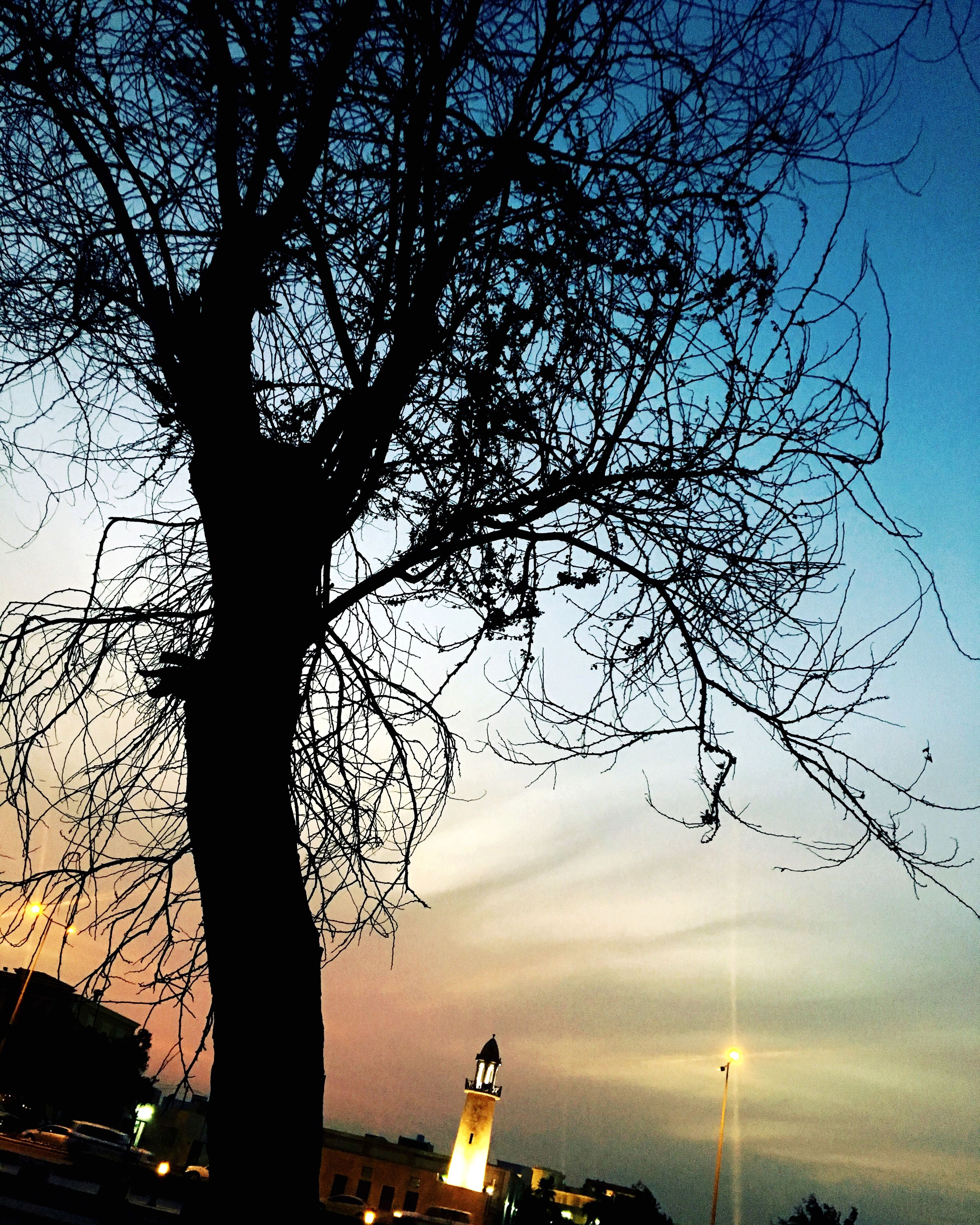 tree, sky, sunset, nature, silhouette, beauty in nature, outdoors, tranquility, no people, branch, scenics, foreground, day, architecture