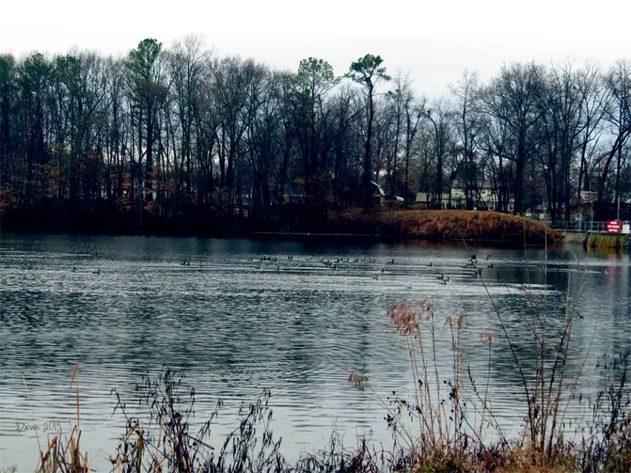 No matter how cold the ducks are enjoying a swim. Autumn Water_collection Nature_collection Gloomy Weather