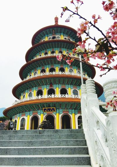 Taiwan Temple Cherry Blossoms Cherry Blossom Cherry Tree Spring Springtime Spring Into Spring Temple - Building ASIA Asian Temple Asian Culture Sky Temple Architecture Templephotography Temples EyeEm Best Shots Eye4photography  EyeEm Gallery Tree And Sky Eye4photography  Hello World Check This Out Tourism Tourist