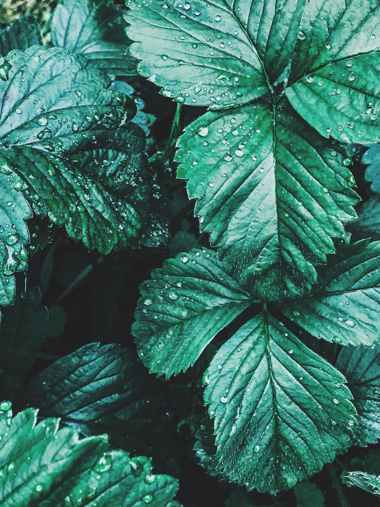 Leaf Green Color Growth Nature Plant Beauty In Nature No People Day Close-up Outdoors Fragility Freshness Water Rainy Water Droplets Close Up Green Color Simplicity Growth