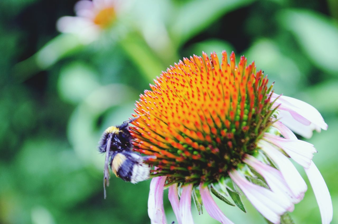Beautiful stock photos of bee, Animal Themes, Animals In The Wild, Beauty In Nature, Blossom